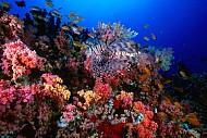 Cùng khám phá những hoạt động thú vị nhất tại HP Reef Maldives