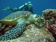 Thiên đường Maldives, nơi hội tụ rất nhiều địa danh nổi tiếng