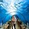 Chiêm ngưỡng khám phá nhà hàng độc dưới nước ở Maldives