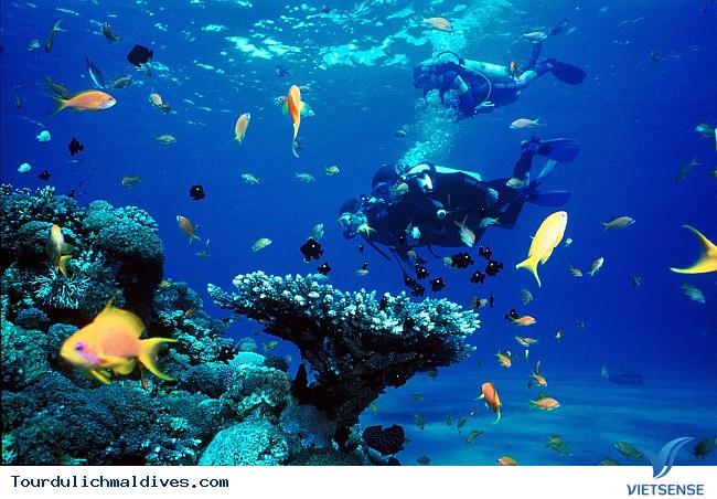 Khám phá khu rừng dưới lòng đại dương của Maldives - Ảnh 3