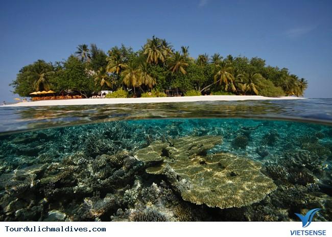 Khám phá khu rừng dưới lòng đại dương của Maldives - Ảnh 2