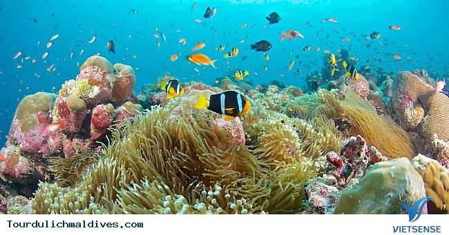 Kỳ nghỉ đáng nhớ cho các cặp đôi tại Maldives - Ảnh 3