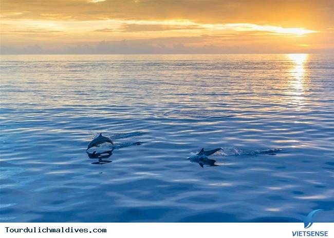 Trải nghiệm những hoạt động khác ở Maldives - Ảnh 4