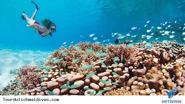 Trải nghiệm những hoạt động khác ở Maldives - Ảnh 3