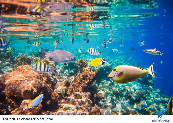 Khám phá lòng đại dương huyền ảo từ nhà hàng dưới nước tại Maldives - Ảnh 4