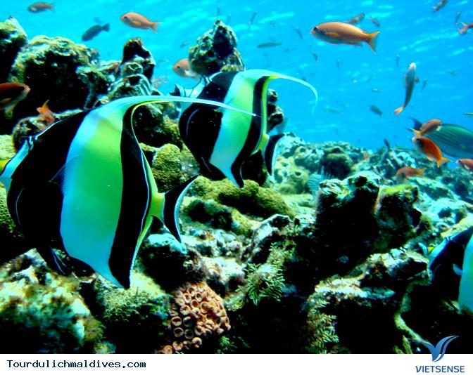 Thiên đường du lịch Maldives, nơi hội tụ rất nhiều địa danh nổi tiếng - Ảnh 3