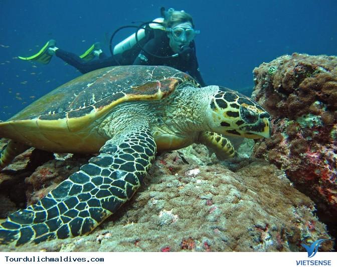 Thiên đường du lịch Maldives, nơi hội tụ rất nhiều địa danh nổi tiếng - Ảnh 1