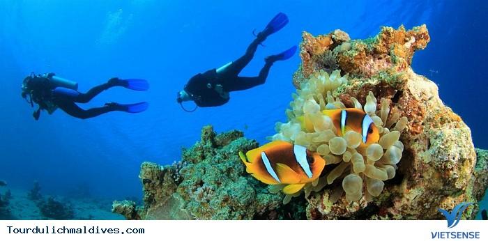 Lặn biển – trải nghiệm thú vị khi đi du lịch Maldives - Ảnh 1