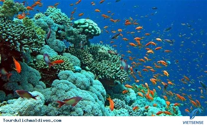 Lặn biển – trải nghiệm thú vị khi đi du lịch Maldives - Ảnh 2