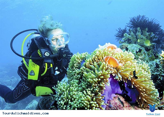 Lặn biển – trải nghiệm thú vị khi đi du lịch Maldives - Ảnh 3