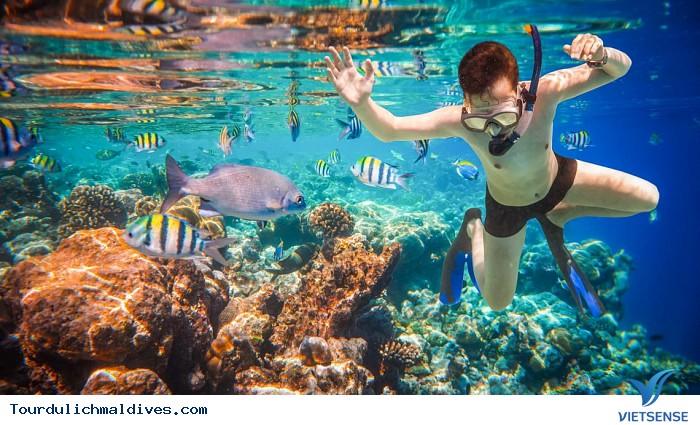 Snorkeling – trải nghiệm bơi với kính và ống thở khi đi du lịch Maldives - Ảnh 2