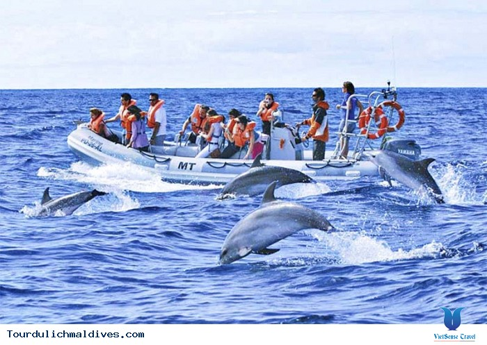 Thích thú ngắm cá heo ngụp lặn trên mặt biển Maldives - Ảnh 3
