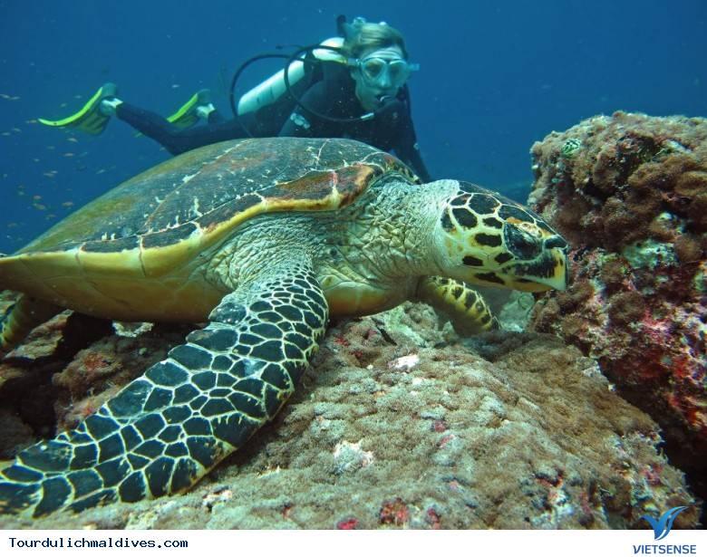 10 điểm hàng đầu không thể không ghé thăm khi đi du lịch Maldives - Ảnh 9