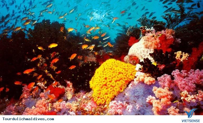 10 điểm hàng đầu không thể không ghé thăm khi đi du lịch Maldives - Ảnh 6