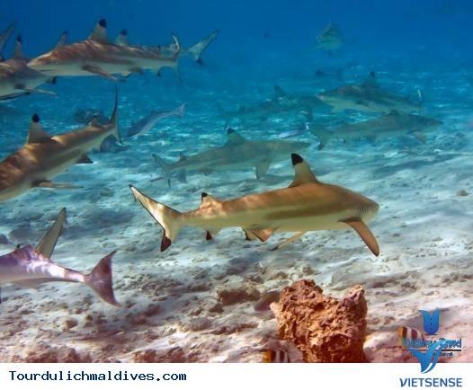11 Ly Do Khien Ban Nen Du Lich Den Maldives 1 Lan Trong Doi - Ảnh 6