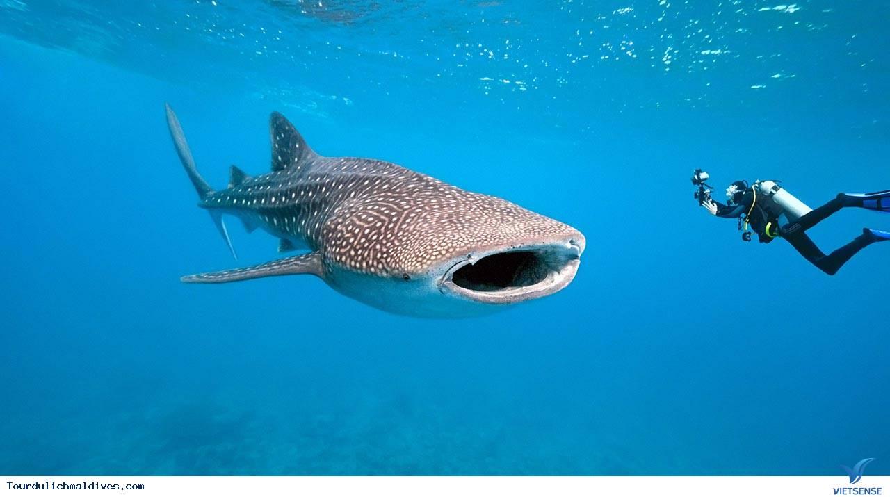 11 lý do khiến bạn nên du lịch Maldives một lần trong đời - Ảnh 9