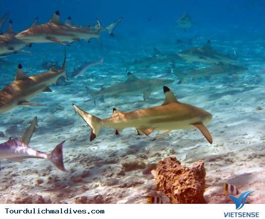 11 lý do khiến bạn nên du lịch Maldives một lần trong đời - Ảnh 7