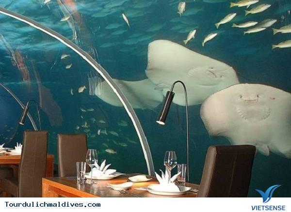 Chiêm ngưỡng khám phá nhà hàng độc dưới nước ở Maldives - Ảnh 3