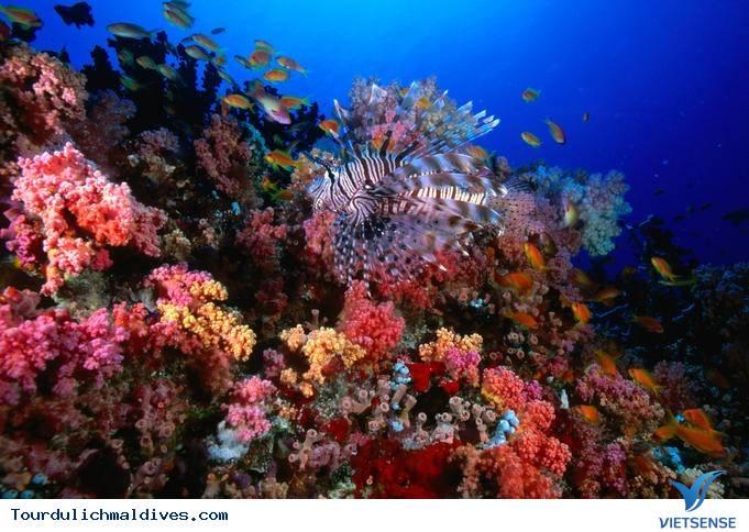 Cùng khám phá những hoạt động thú vị nhất tại HP Reef Maldives - Ảnh 1