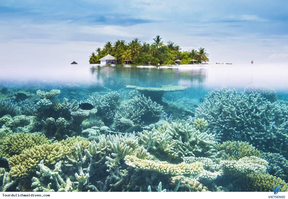Khám phá những điều thú vị tại vùng biển xanh tuyệt diệu Maldives - Ảnh 3