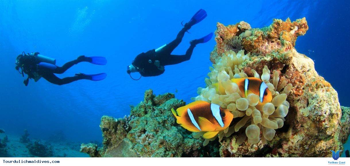 Lặn biển – trải nghiệm thú vị khi đi du lịch Maldives