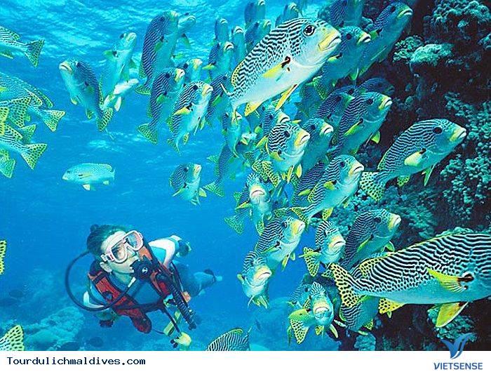 Lặn biển – trải nghiệm thú vị khi đi du lịch Maldives - Ảnh 4