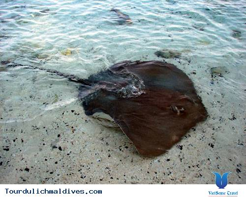 Maldives sắp chìm và biến mất khi nước biển dâng lên - Ảnh 5