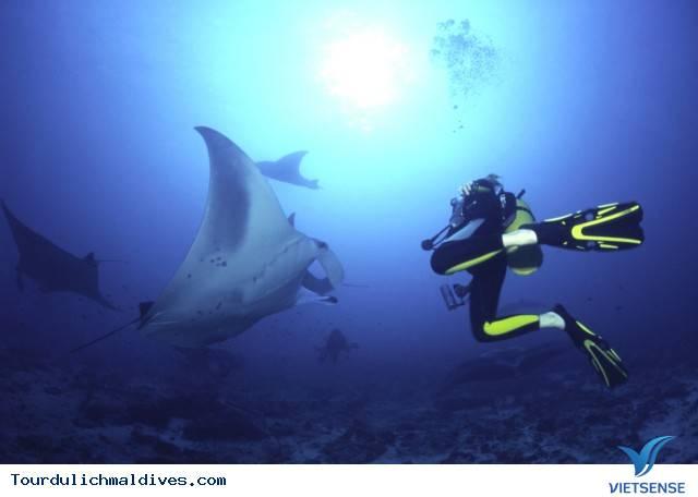 Những cảm nhận khó quên tại Manta Point của đảo ngọc Maldives - Ảnh 2