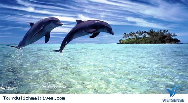 Thích thú ngắm cá heo ngụp lặn trên mặt biển Maldives - Ảnh 1