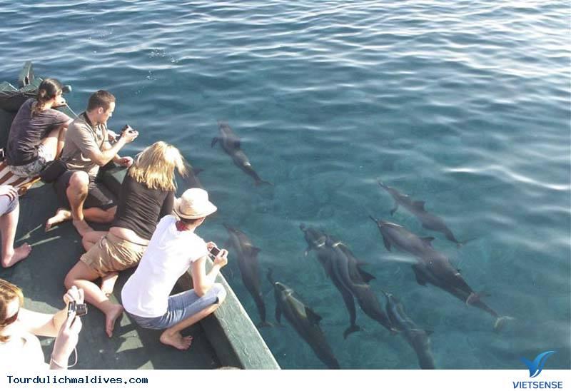 Thích thú ngắm cá heo ngụp lặn trên mặt biển Maldives - Ảnh 2
